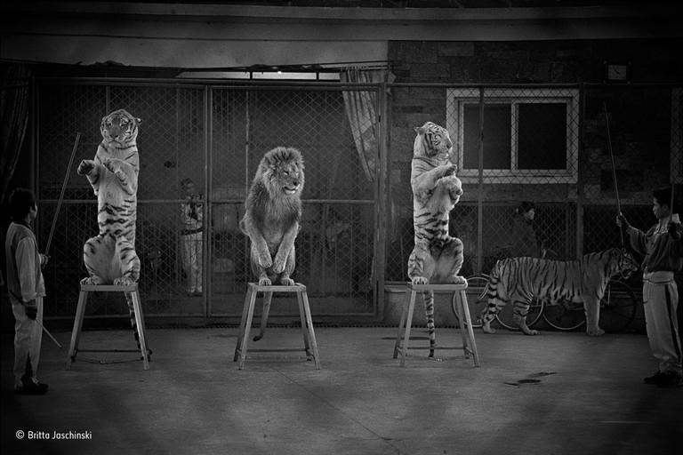 Broken cats by Britta Jaschinski / Wildlife Photographer of the Year 2015