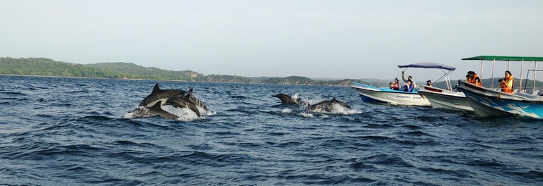 Dolphin watching - Trincomalee. Photo by Nicole Figueiredo