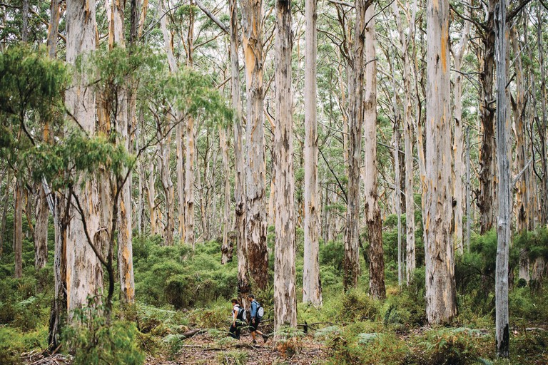 Walk Into Luxury, Cape to Cape Track, Margaret River, WA | Courtesy of Walk Into Luxury © Photo Elements Margaret River / Mark Boskell