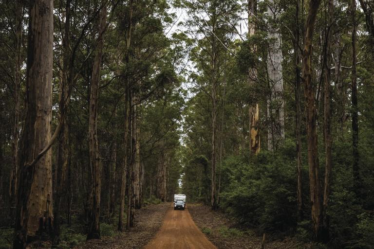 Boranup Karri Forrest, Leeuwin-Naturaliste National Park, WA | © Sean Scott