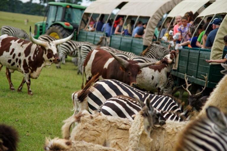 Global Wildlife Center animal train ride | © Randall R. Saxton/Flickr