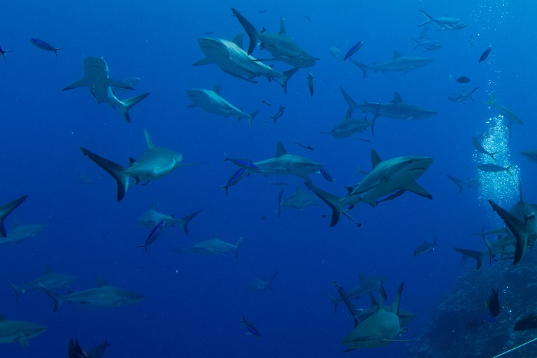 Sharks | © Tchami / Flickr