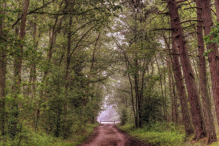 Forest of Fontainebleau © Miwok/Flickr
