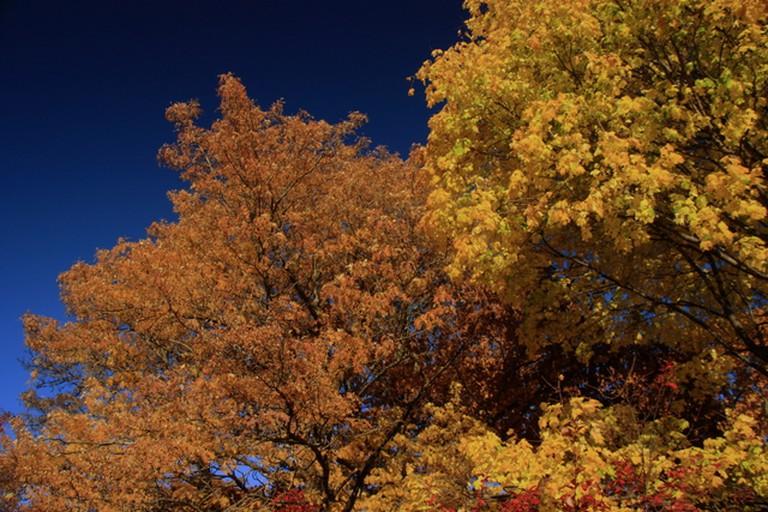Arnold Arboretum|©Bill Ilott/Flickr