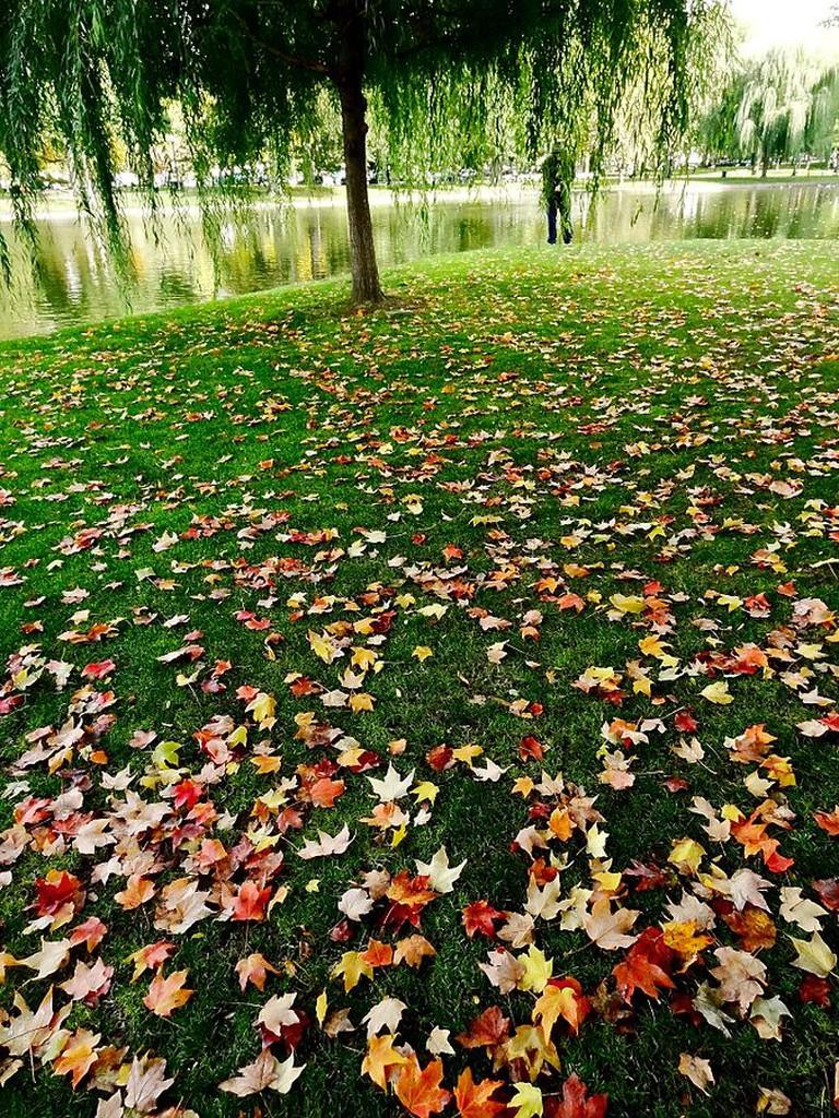 Boston Public Garden|©Rizka/Flickr
