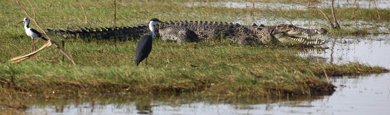 Saltwater Crocodile | © Andy Tyler / Flickr