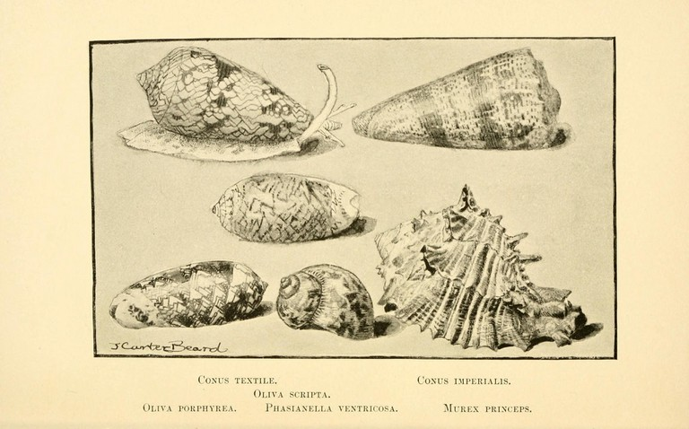 The hall of shells | © Biodiversity Heritage Library / Flickr
