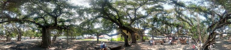 Inside the Banyan tree, Banyan Tree Park, Lahaina, Maui   © Mary and Andrew/Flickr