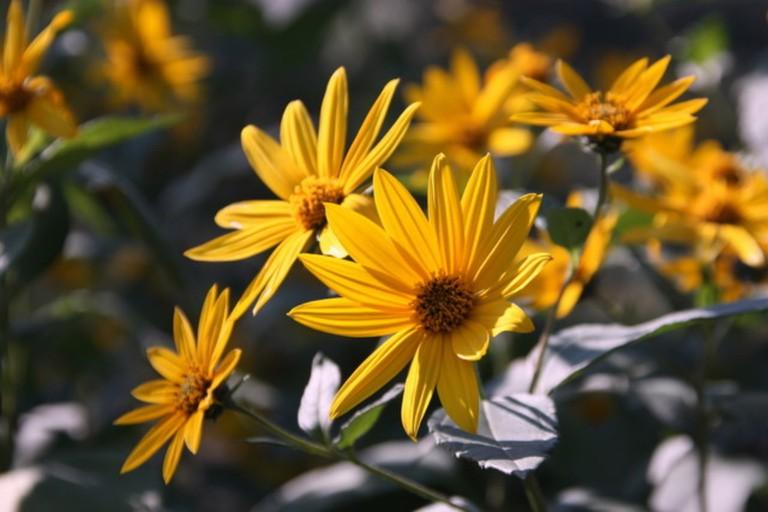 Flowers at Arnold Arboretum |© Bill Ilott/Flickr