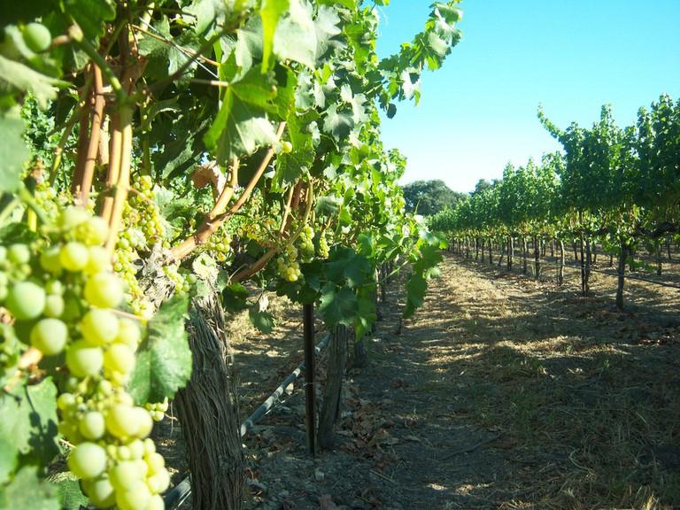 Wine Tasting_133 © ChrisMichaels/Flickr.com