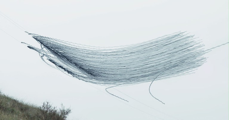 Ornitgrafia _03 | Courtesy of Xavier Bou