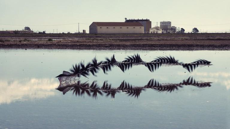 Ornitgrafia _17 | Courtesy of Xavier Bou