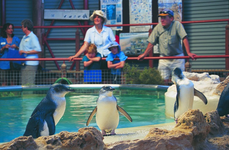 The Penguin Experience | Courtesy of Tourism Western Australia