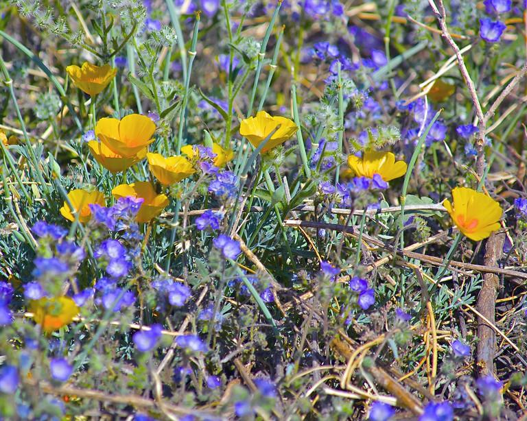 Arizona wildflowers | © wplynn/Flickr