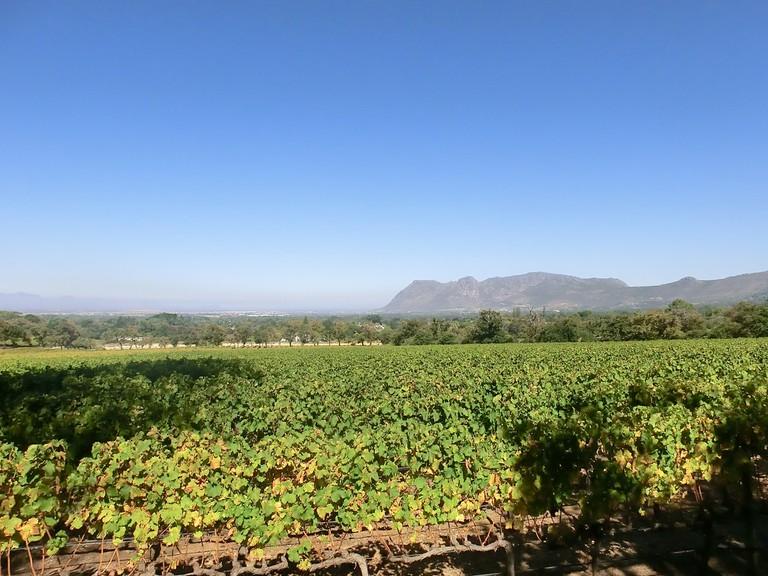 Constantia Wine Valley © Ixmatex Wu/Flickr