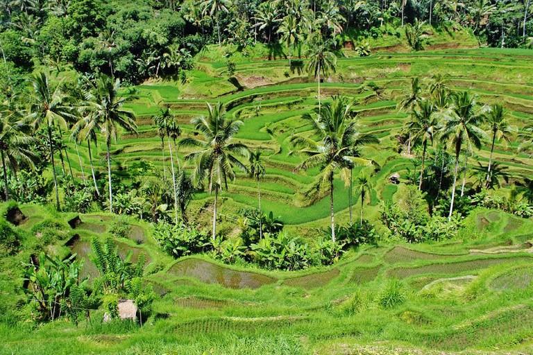 Bali Rice Paddies | Mariamichelle/Pixabay