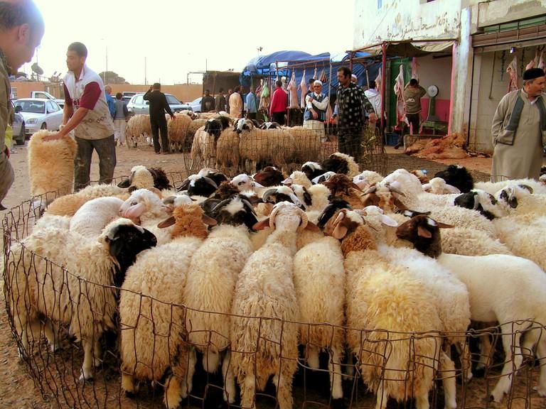Livestock market in Tripoli.   © Sarah Elmusrati