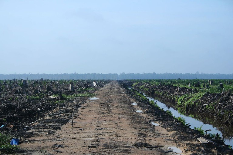 Indonesian Rainforest Cleared To Plant Palmoil| © Hayden/WikiCommons
