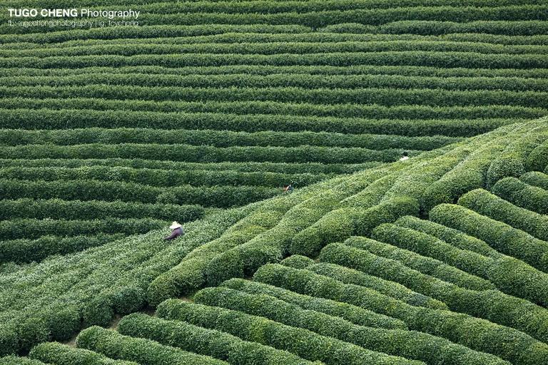 Taken in Zhejiang |Courtesy of Tugo Cheng