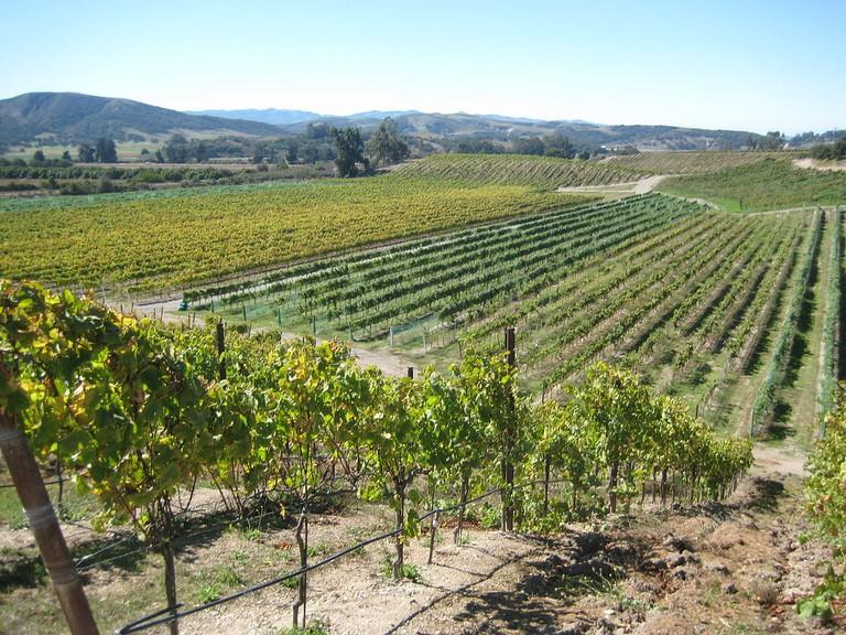 Sta. Rita Hills AVA, Santa Barbara County, California, USA   © radfordschultze/Wikicommons