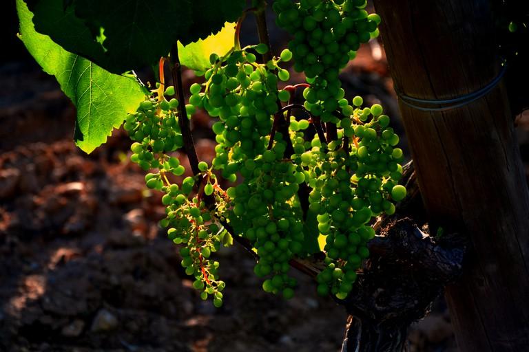 Grapes | © Angela Llop/Flickr