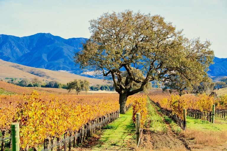 Santa Ynez Valley Vineyard   © Harold Litwiler/Flickr