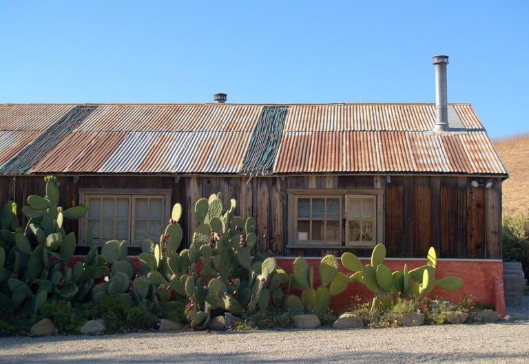 Alma Rosa Cacti   © TheSquirrelfish/Flickr
