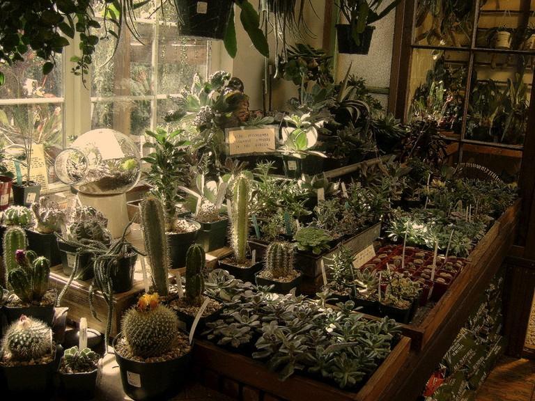 Plants © V. H. D./Flickr