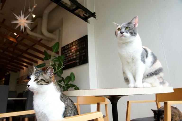 Cat Café | © melanie_ko/Flickr