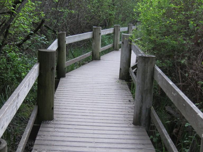 Tilden Park Hiking Trail © Jay Cross/Flickr