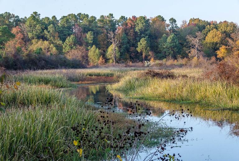 Bayou Bartholomew near Pine Bluff, AR | © Keith Yahl/WikiCommons