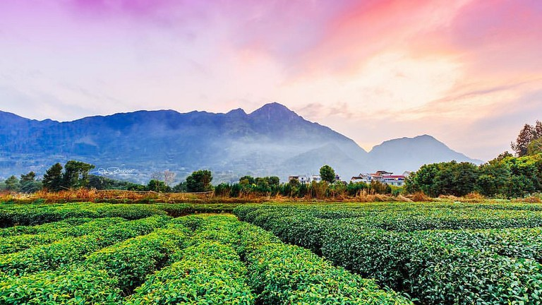A tea plantation in Fujian, China | HAI YANG/Flickr
