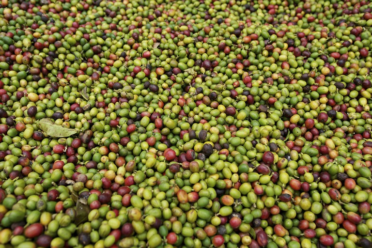 Coffee beans before being roasted |© Oxfam East Africa/Flickr