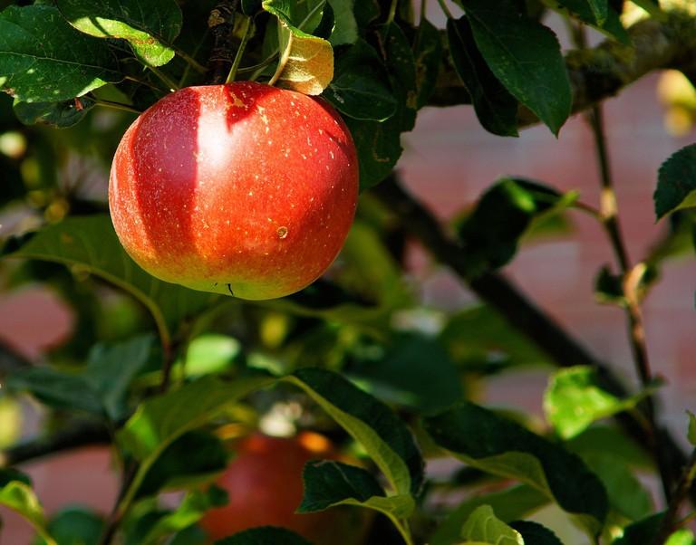 Apple picking © Pexels
