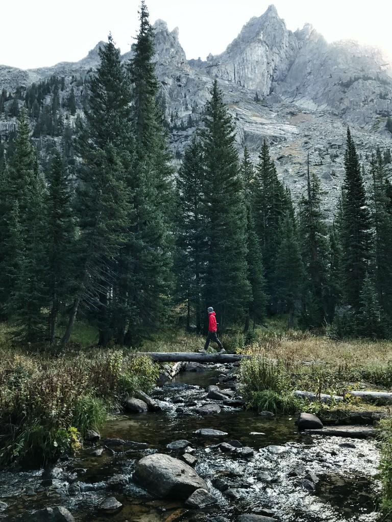 Colorado forest.   Courtesy Kevin Lu.