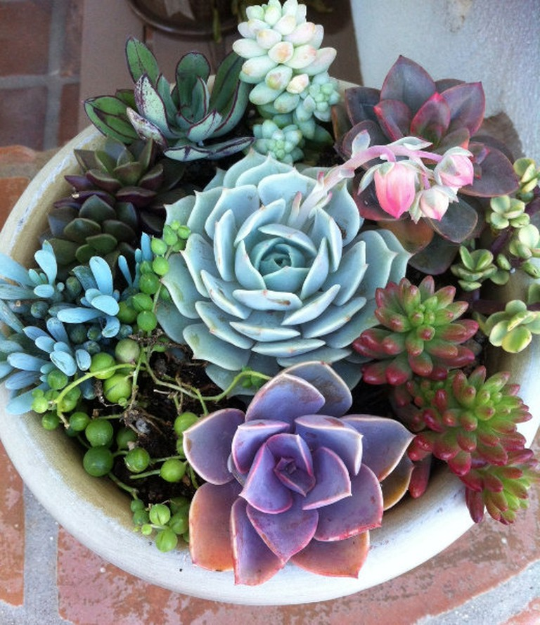 Hand-selected succulents from Etsy
