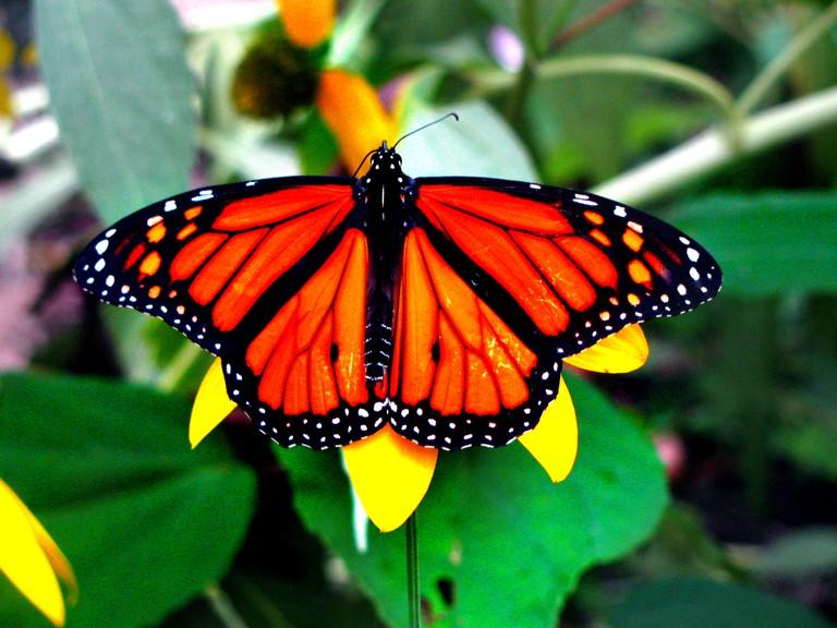 Bright orange butterfly | © Lauren Fritt/Flickr
