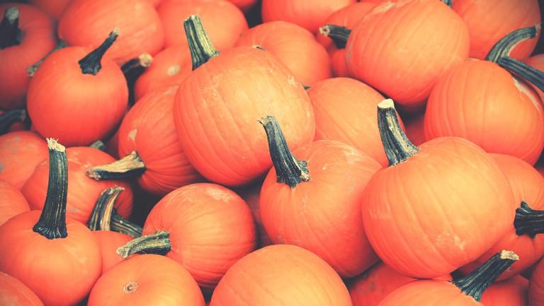 Pumpkin patch © Pexels
