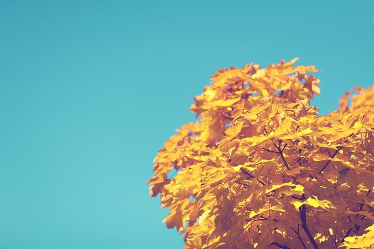 Fall foliage © Pexels