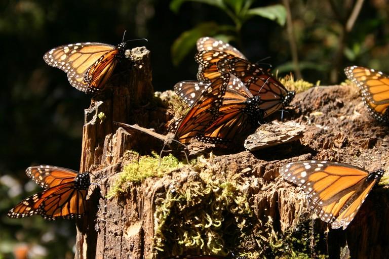 Butterflies on bark | © Scott Clark/Flickr