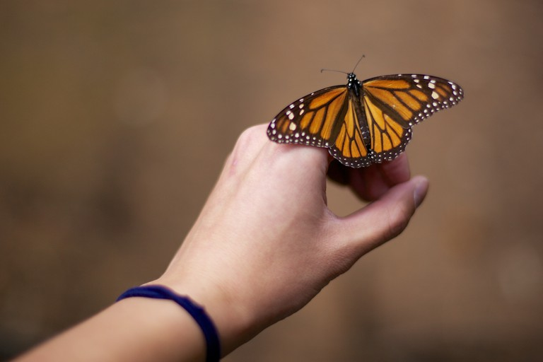 Butterfly on hand | © Jiuguang Wang/Flickr