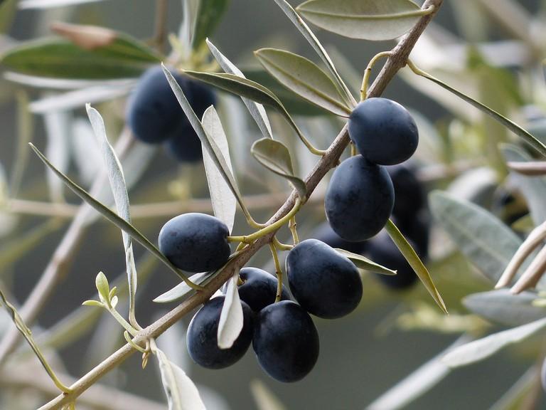 Kalamata olives | ©Pixabay