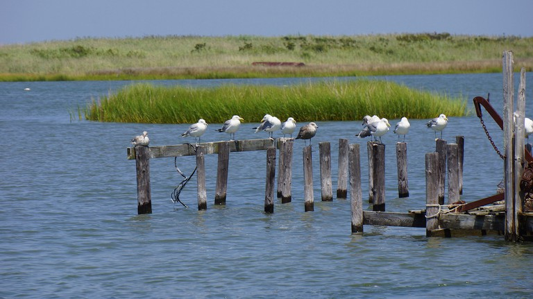 birds-crowd-along-abandoned-pier-tangier-island | © J. Albert Bowden II/Flickr