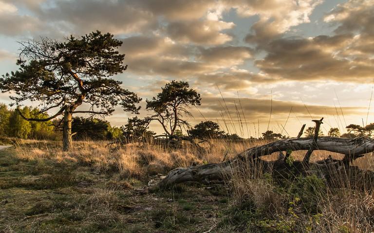 De Maasduinen National Park   © Lieblingsgouda/WikiCommons