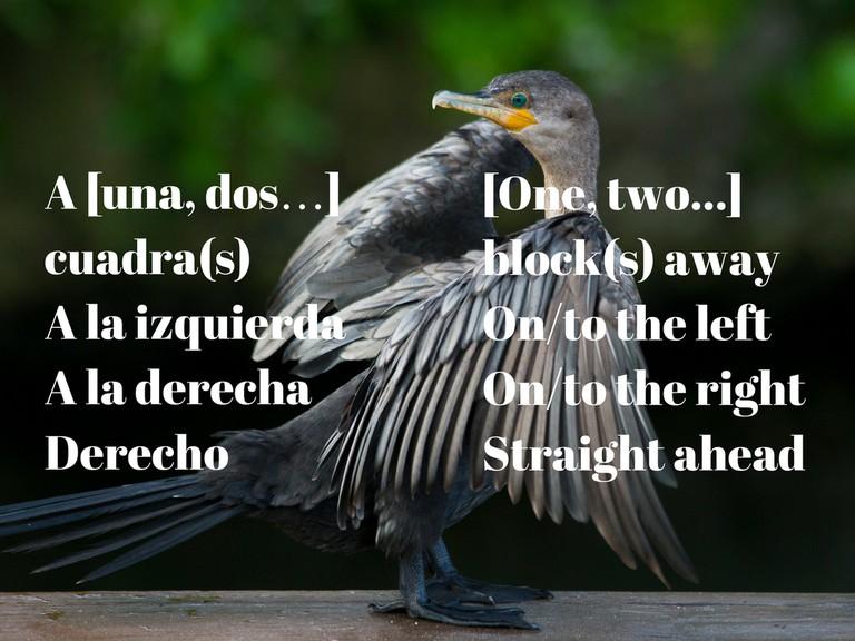 Bird in Quintana Roo | © Dave Doe/Flickr