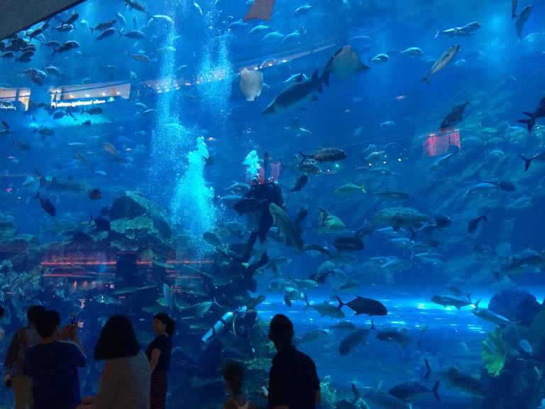 Scuba diver in The Dubai Mall Aquarium | ©Scott Edmunds / Flickr http://bit.ly/2kJAS3B