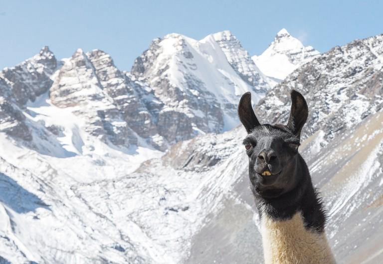 Treking with a Llama | © Goulevitch Jérémie/Flickr