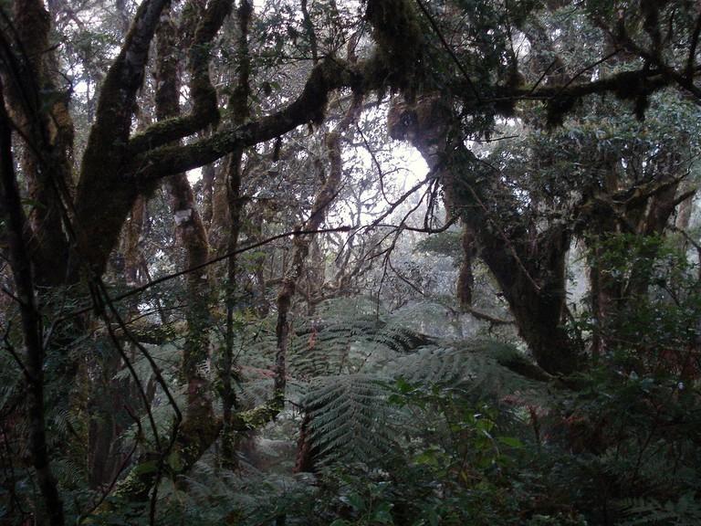 Amboro National Park | © Ángel M. Felicísimo/Flickr