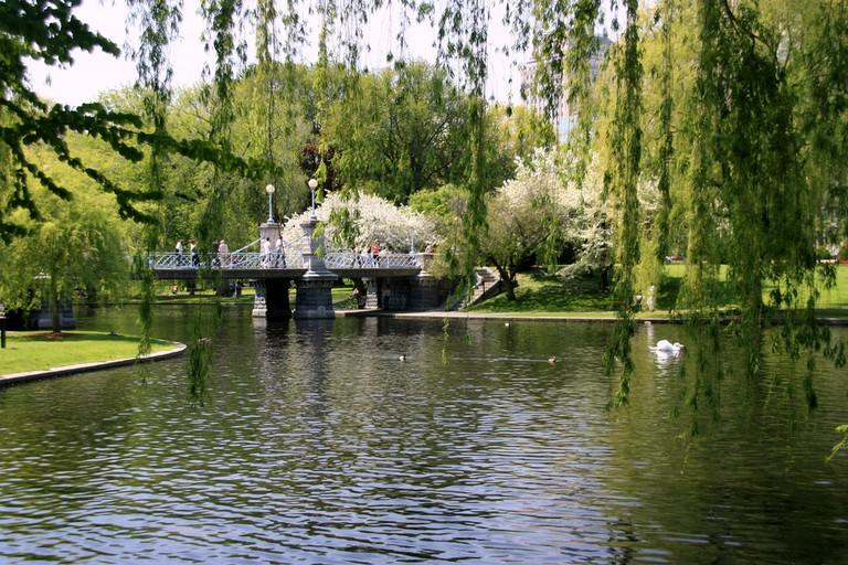 Boston Public Garden   © Bill Ilot / Flickr