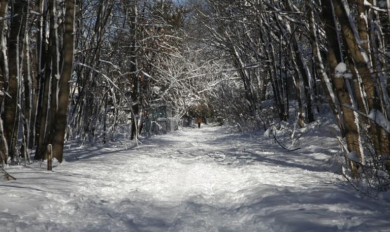 Take a snow walk on the Minuteman Bikeway   © Doug Searls/Flickr